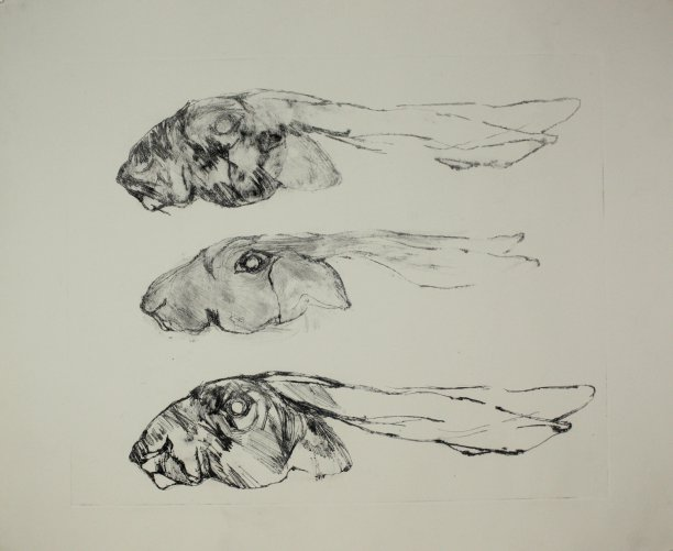 Poor Hare - drypoint